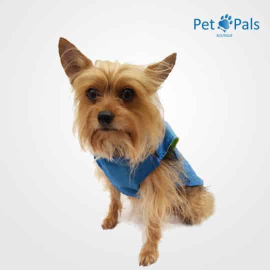 Raincoat azul impermeable para perro frente