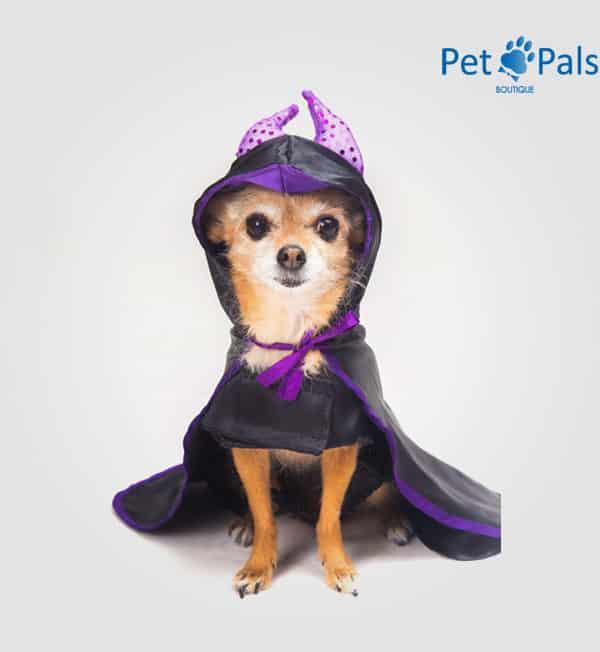 Disfraz de Malefica para perro