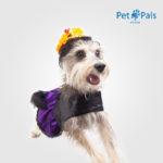 Disfraz de catrina para perro